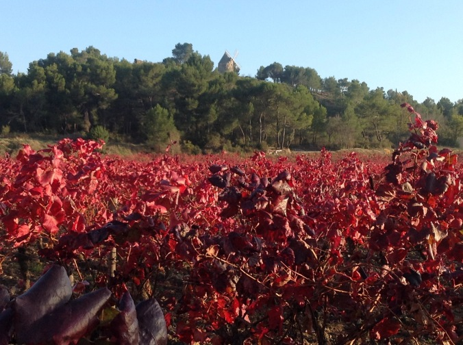 red-vines-to-moulin