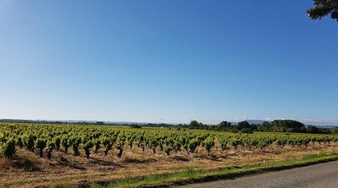 Vinfält i Frankrike