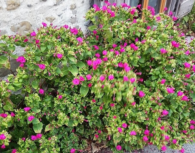 blomma frankriek hus