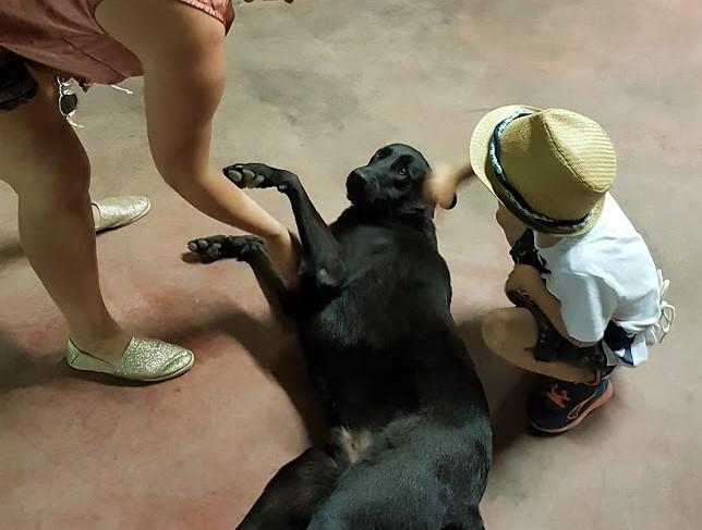 hund vinslott france.jpg