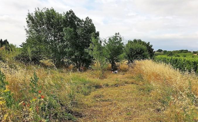halvvägs röjt jardin