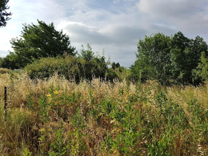 vildvuxen trädgård peyriax