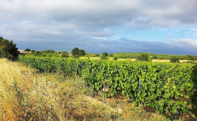 vingård jardin peyriac