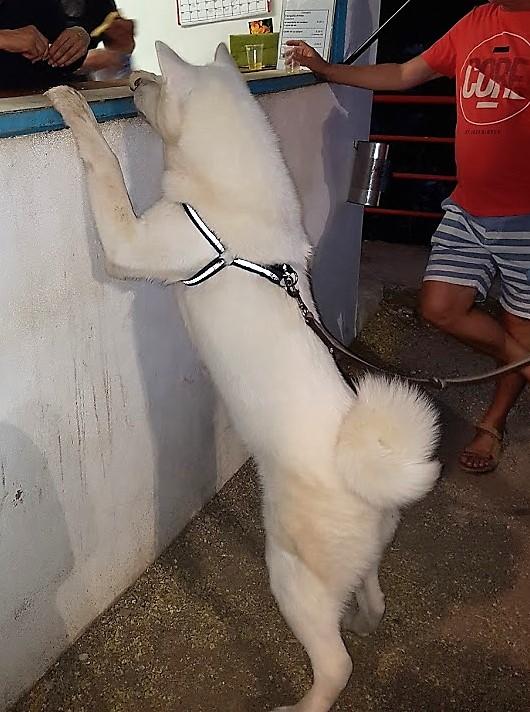 hund vid bar