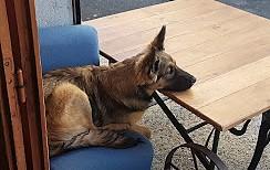 krog hund
