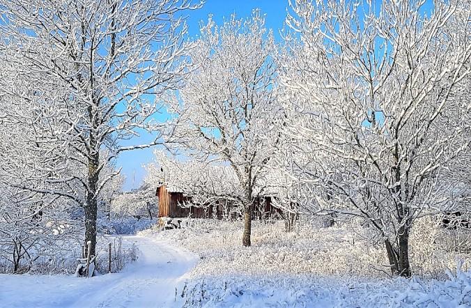 vinter blidö 2019