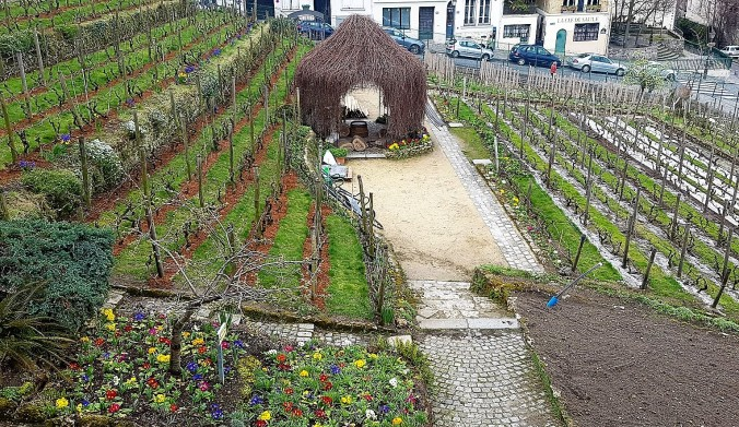 vigne 2 montmartre