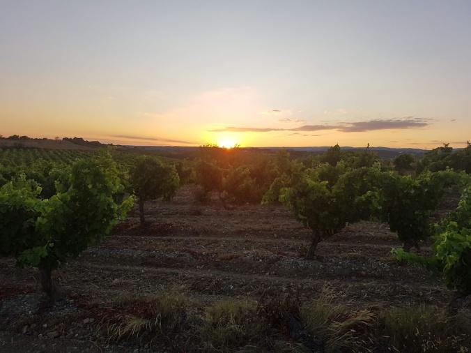 soleil vignes aude