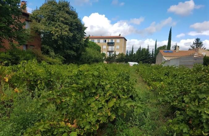 vinfält mitt i byn