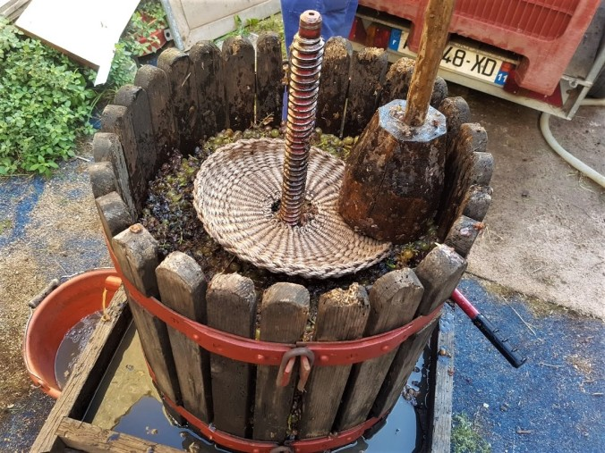 fleta lager druvor.jpg
