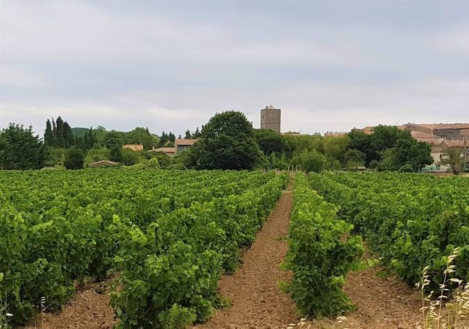 vingård 2